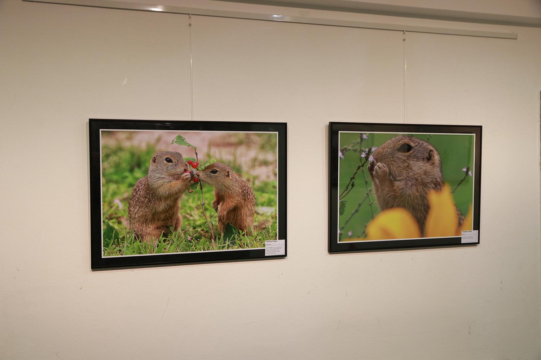 Ausstellung 002
