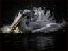 Spanring Pelikan