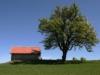 gritsch-birnenbaum