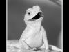 img_0844-30x40sw-rr-salamander-spike